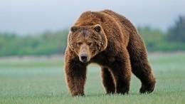 Невероятное хладнокровие проявил итальянский мальчик, встретив огромного медведя