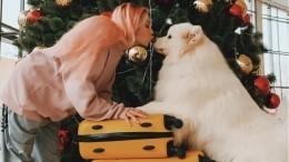 «Абсолютно еепонимаю»: Эдгард Запашный оскандале сплемянницей якобы укравшей собаку