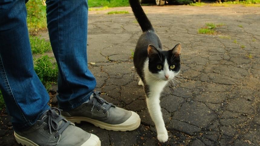 ВРоссии впервые поставили диагноз COVID-19 кошке