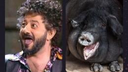 Накаких животных похожи российские знаменитости? —всети новый флешмоб
