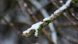 Погодные сюрпризы: первый день лета Салехард встретил снегом— видео