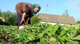 Что можно сажать нагрядках впериод июньского похолодания— советы агронома