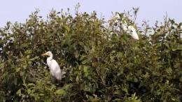 Ученые предрекли скорое исчезновение уникальной экосистемы