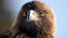 ВДагестане проводят проверку пофакту убийства накамеру краснокнижного орла