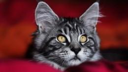 Легкая «КОТлетика» и«КОТокросс»: вСеверной столице отметили Всемирный день петербургских котов