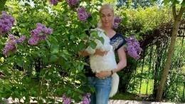 «Веранда удачи»: Волочкова похвасталась новой стрижкой своего кота
