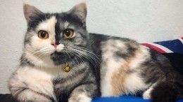 Кошка с«половинчатой» мордой покоряет просторы интернета— фото