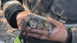 Видео: самоотверженный пожарный вытащил изогня крошечных котят вЛенобласти
