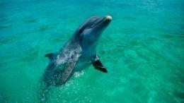 Собаке удалось догнать дельфина вморе— видео