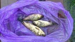 «Карась изберегов вышел»: вТверской области прошел «рыбный дождь»