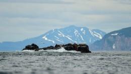 НаКамчатке продолжаются поиски моряков, пропавших после крушения катера