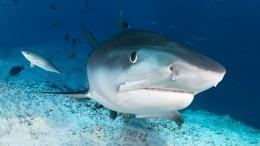 Видео: Акула погналась заподростками вАвстралии