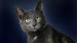 Призрак умершего кота попал навидео