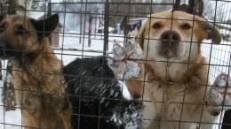 Кто закого вответе? Бродячие псы держат встрахе город вРязанской области