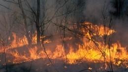 Режим ЧСобъявлен наКамчатке из-за лесных пожаров