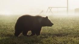 Невозмутимая реакция девушки надикого медведя спасла ейжизнь— видео