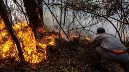 Лесные пожары охватили десятки регионов России