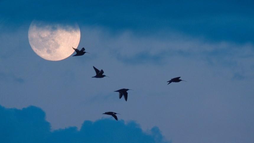 Лунный календарь наиюль: Что можно инельзя делать