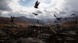 ВМонголии объявили карантин из-за бубонной чумы