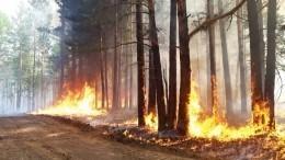 Горящие леса вХМАО угрожают близлежащим городам