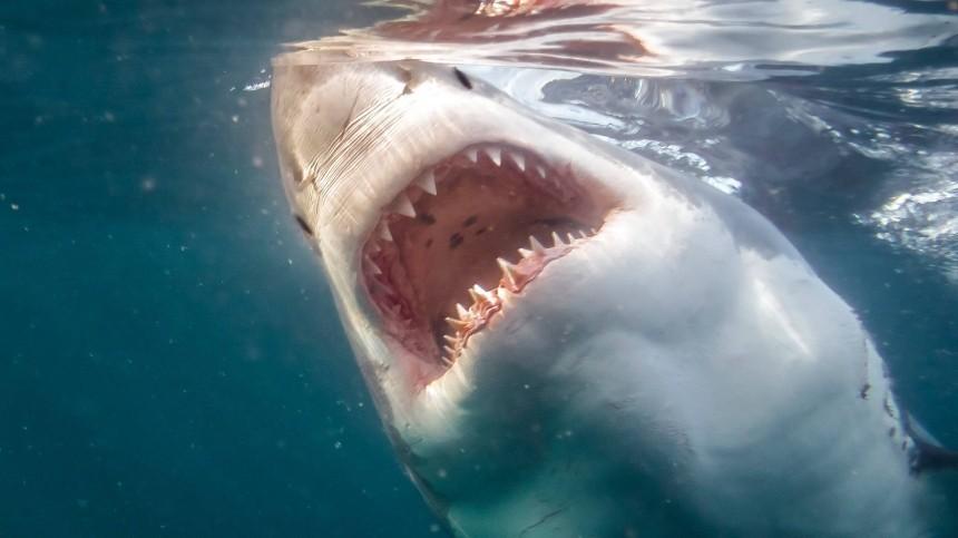 Уникальный случай: акула набросилась накрокодила вАвстралии— видео