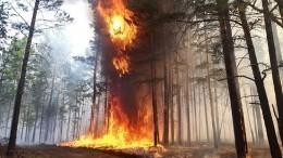 Правительство РФвыделит миллиарды рублей натушение лесных пожаров врегионах
