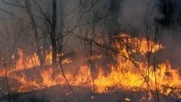 Глава МЧС заявил, что лесные пожары возникают вместах вырубки деревьев