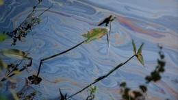 ВБрянске бьют тревогу! Рыбаки заметили вреке Десна большое нефтяное пятно— видео