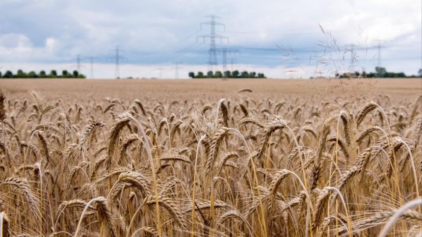 ВСША испугались запрета навывоз зерна изРоссии