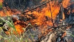 Отзасухи наУрале гибнут леса исельхозугодья— видео