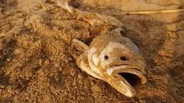 Массовый мор рыбы вАдыгее: «Вот так делала ртом вчера, асегодня всплыла вся»
