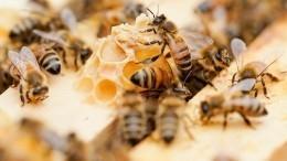 Пчеловод вЕкатеринбурге устроил соседям настоящий крылатый террор