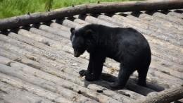 Калининградский зоопарк заодну ночь потерял сразу четырех животных