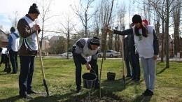 Более 27 миллионов деревьев в50 странах мира высадили участники акции «Сад памяти»