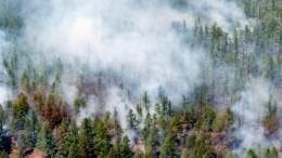 Площадь лесных пожаров вРоссии занеделю выросла более чем вдва раза