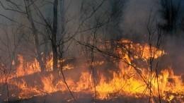 Видео: Целый город эвакуировали воФранции из-за природного пожара
