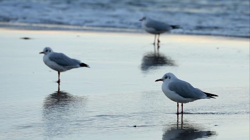 Очевидцы сообщили осливе нефтепродуктов вФинский залив у«Лахта-центра»
