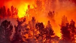 Жителей Калифорнии массово эвакуируют из-за лесных пожаров