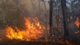 Лесные пожары вЯкутии тушат более 700 человек