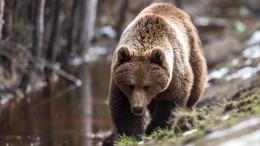Мужчины налодке вупор расстреляли медведя наБайкале— видео (18+)