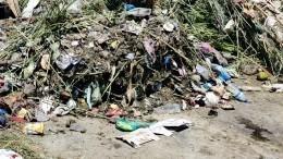 «Это кошмар!»— вНижегородской области из-за свалки химотходов гибнут животные
