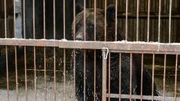 ВСочи закроют все мини-зоопарки после гибели мальчика отлап медведя