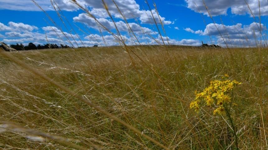 Видео: Фермер вспахивает поле наэлитном внедорожнике зашесть миллионов