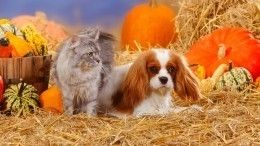 Заклятые друзья: как подружить кошку ссобакой?