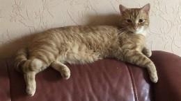 «Очень тоскуем иждем обратно!»: всемье Натальи Водяновой пропал рыжий кот