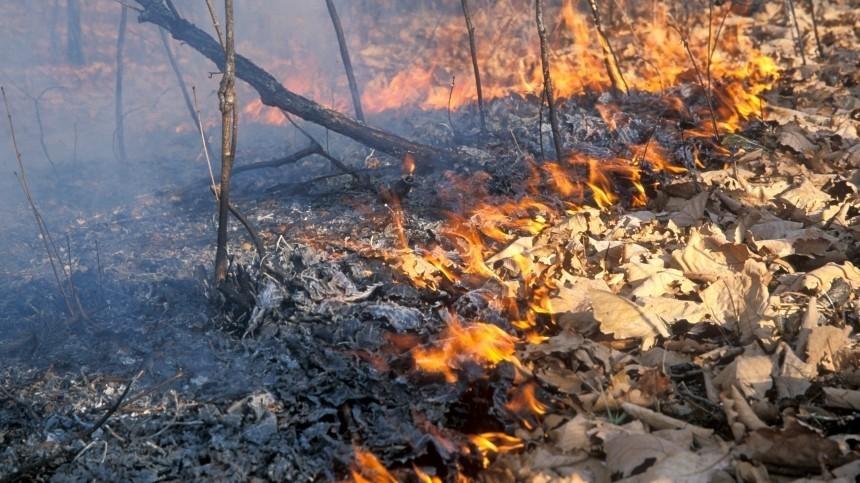 Парашютисты-десантники высаживаются всамое пекло горящих лесов вЯкутии