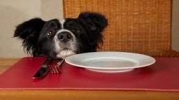 ВКНДР опасаются, что конфискованных домашних собак сдадут намясо