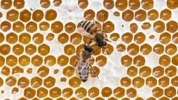 Пчеловод рассказал, как выбрать неподдельный мед