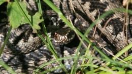 «Самый большой страх»: змея выползла изунитаза жителя Техаса— видео