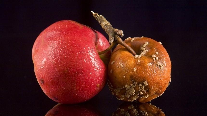 ВРоспотребнадзоре сказали, как правильно выбирать яблоки